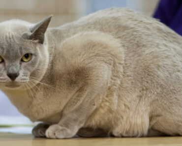 5 Signs Your CAT HATES YOU