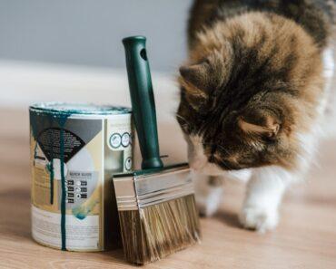 10 Strange Cat Behaviors Finally Explained