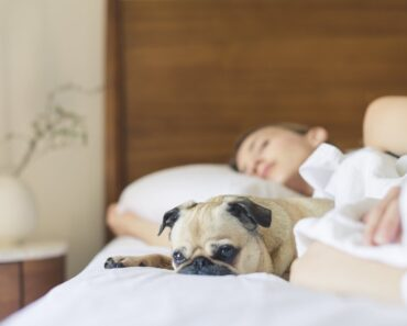 10 Scientific ways that to understand if Your Dog Loves You