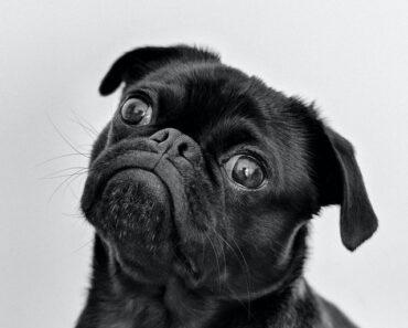 10 Strange Dog Behaviors Problems