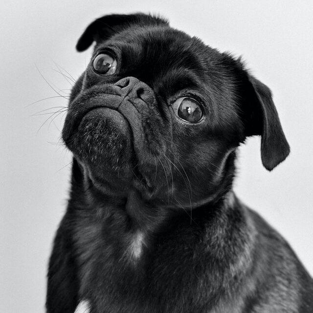 10 Dog Behaviors Explained
