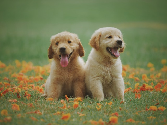 5 superb Facts regarding Dogs!