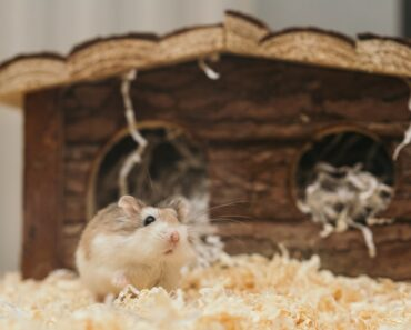 4 Steps to know if Your Hamster's Dying