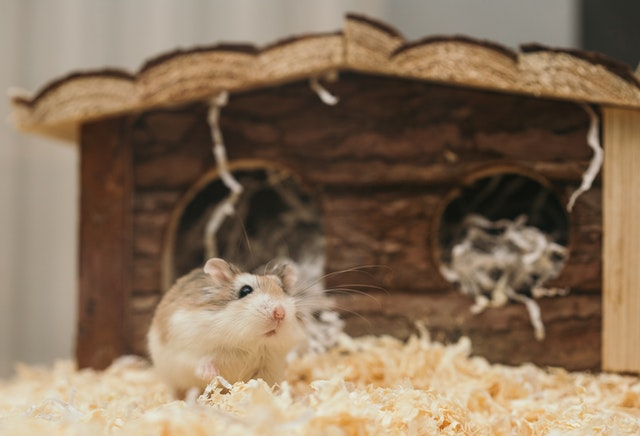 How to know if your hamster's DYING