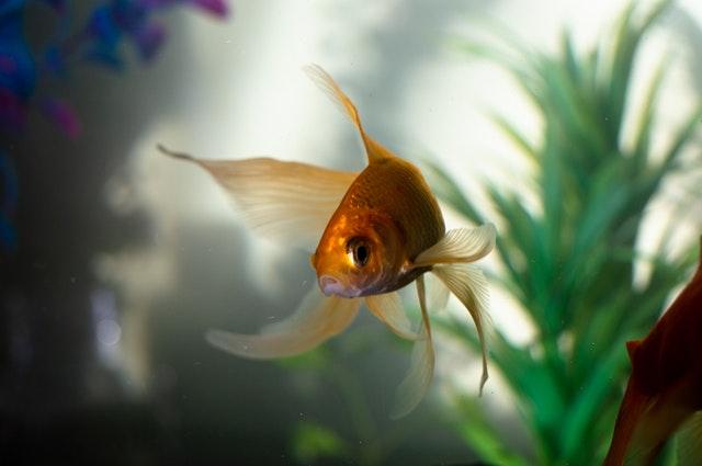 Fish breeding method