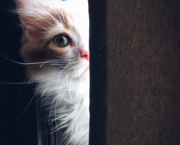 8 signs your cat crying for assist