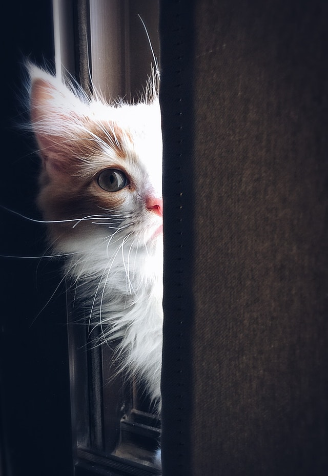 Top 8 signs your cat is crying for assist you didn't recognize