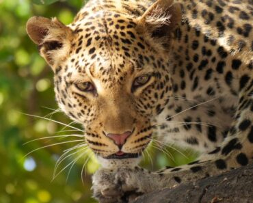 The 10 most dangerous animals in the world