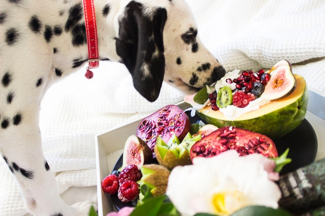 9 Foods which will kill Your Dog