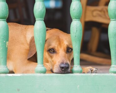 12 Harmful Things for Dog You Must not Ever Do