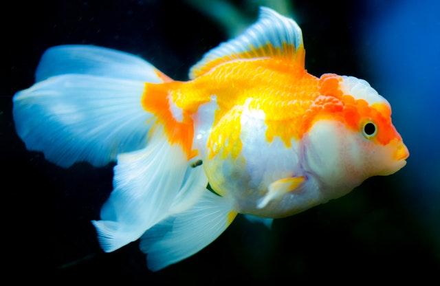 7 popular Fish most aquarium house owners should avoid