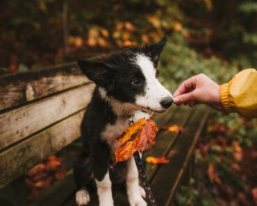 15 Mistakes You are Making with Your DOG