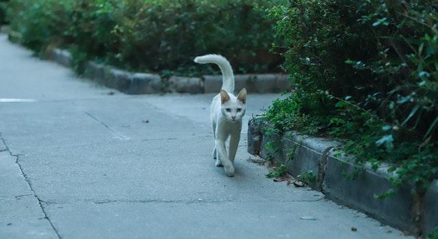 amazingly cat