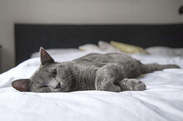 cat lies on back