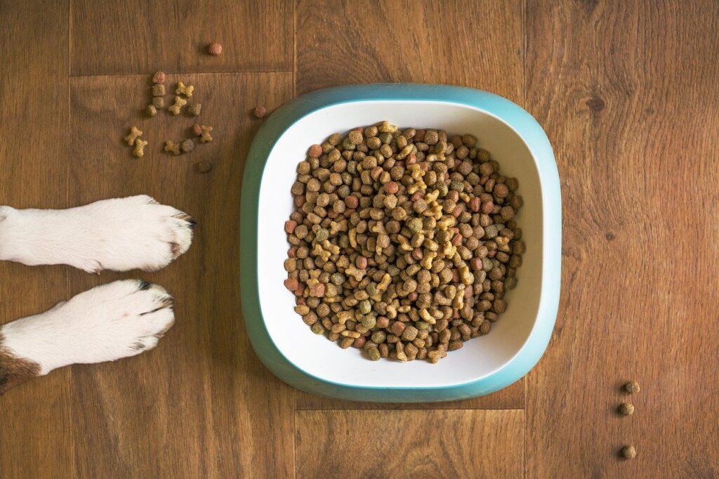 what human foods can dogs eat and not eat