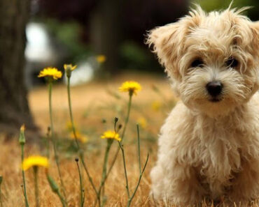 8 CUTEST EXOTIC DOG BREEDS