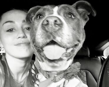 Miley Cyrus Rescues New Dog