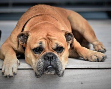 Top 15 amazing Smartest Dog Breeds