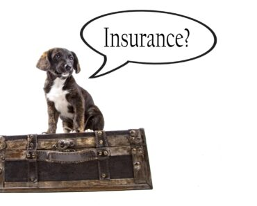 The 6 Best Pet Insurance Options of 2021