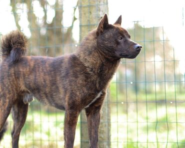 10 RARE DOG BREEDS YOU MAY HAVE NEVER HEARD ABOUT