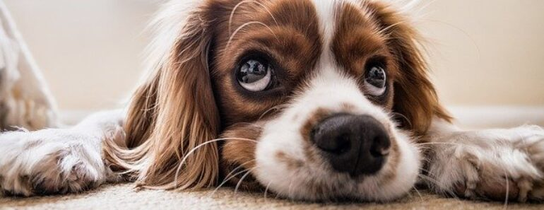 12 Harmful Things You May Be Doing to Your Dog Without Realizing It